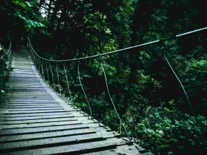 Kinabalu Park Canopy Walkway