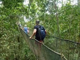 Canopy walk during Kinabalu Park eco tour