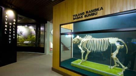 a skeleton of a Sumatran Rhino
