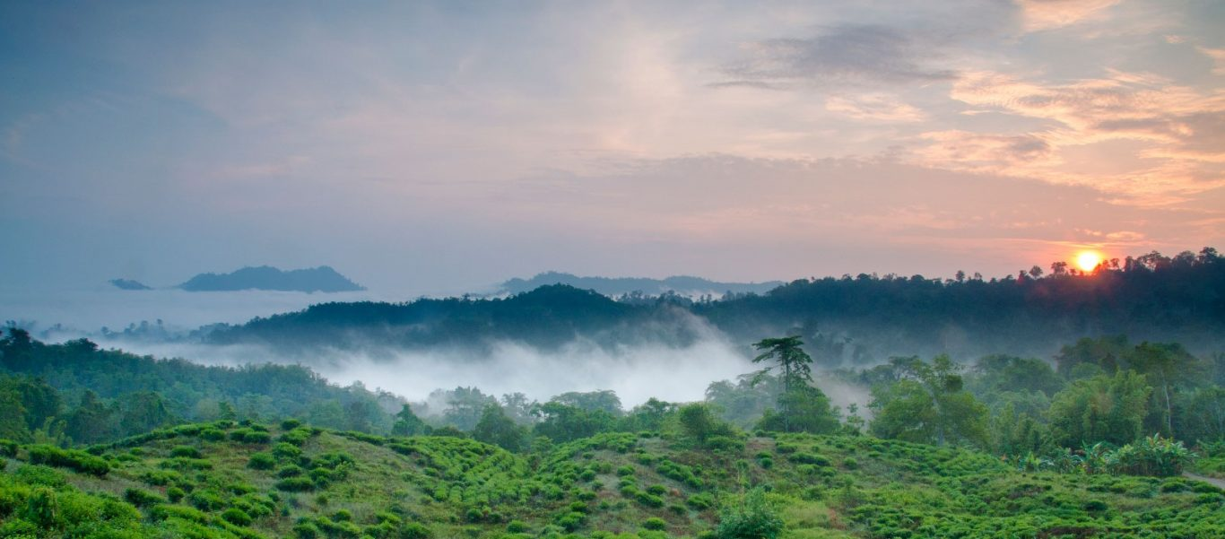 Sabah Tea Garden: Your Weekend Getaway